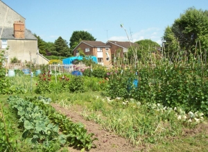 South Road Allotment site image 1