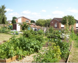South Road Allotment site image 2
